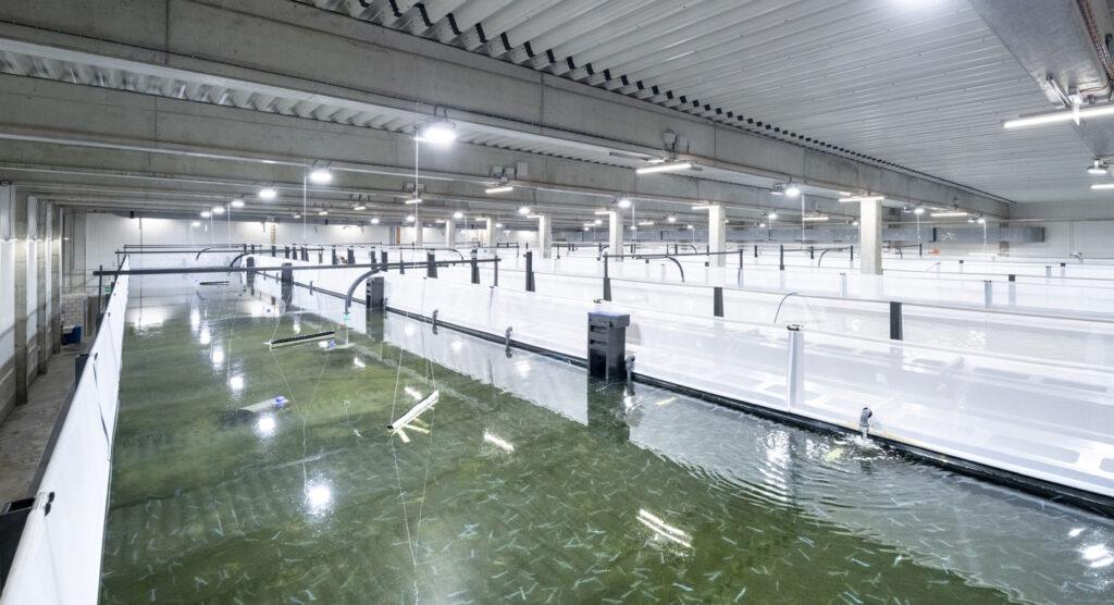 niezwodna i efektywna technologia zapewniajaca optymalne warunki hodowli stacje swiezej wody uzytkowej firmy taconova w najwiekszej europejskiej farmie krewetek5 1024x556 - Niezawodna i efektywna technologia, zapewniająca optymalne warunki hodowli - stacje świeżej wody użytkowej firmy Taconova w największej europejskiej farmie krewetek
