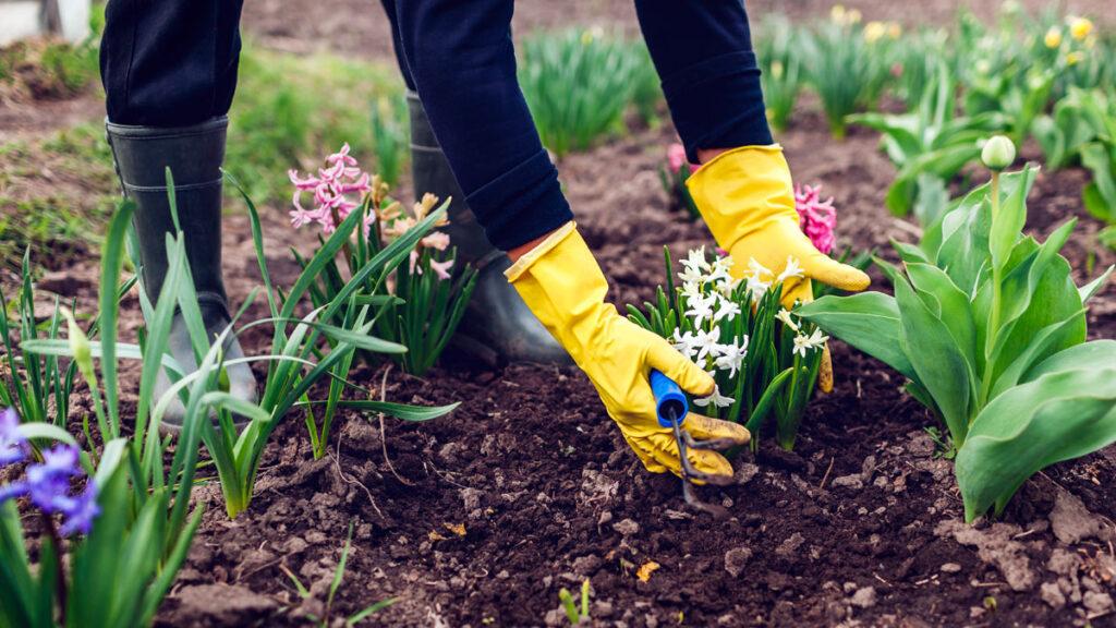 Wiosna. Czas prac w ogrodzie
