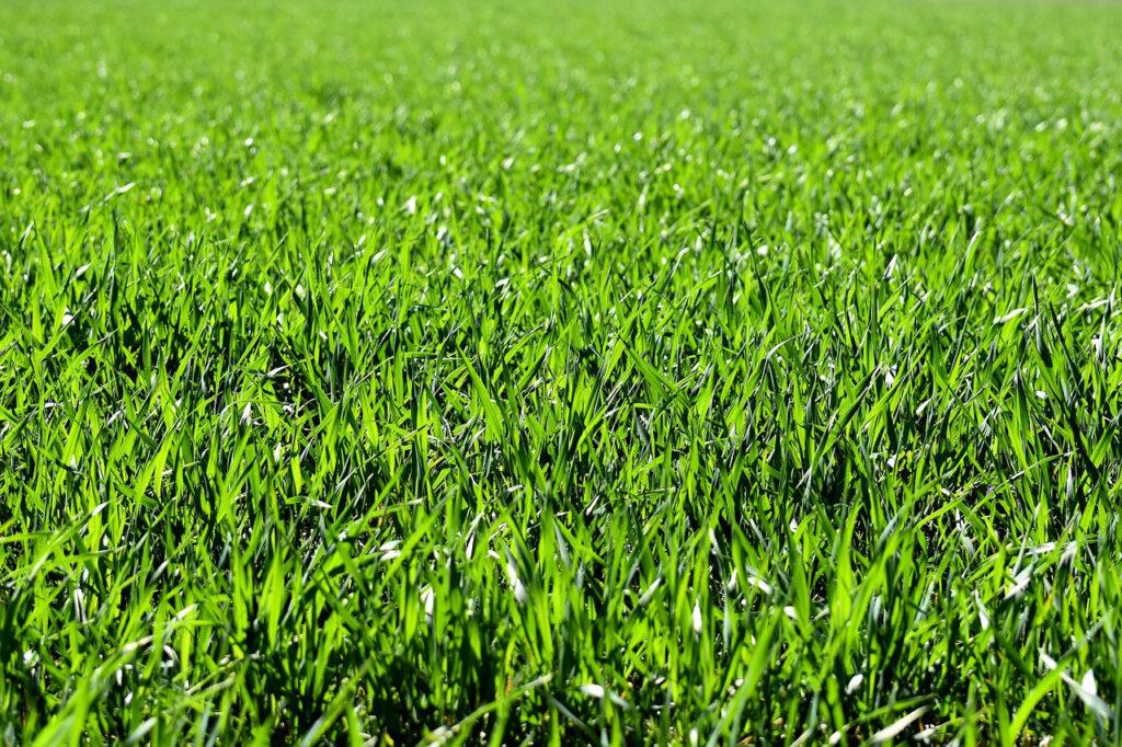 nawadnianie trawnika jak zadbac by byl zielony i pieknie sie prezentowal 1024x682 - Nawadnianie trawnika - jak zadbać, by był zielony i pięknie się prezentował?